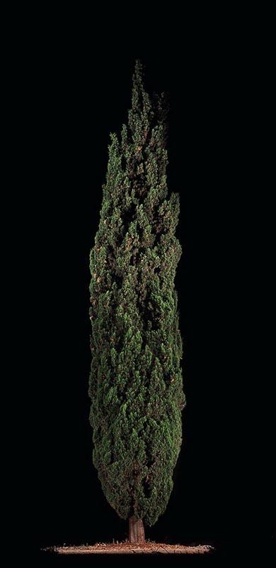108Barosh (Cypress)_2011_color print_172x85.5 cm