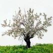 110Almond Tree_2003_color print_74x74 cm