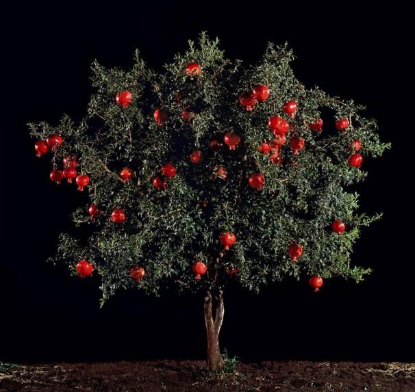 112Rimon (Pomegranate)_2011_color print_123x130 cm