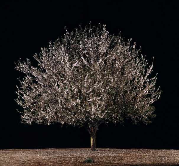 113Shaked (Almond)_ 2011_color print_95x102 cm