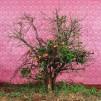 113Untitled _2005_color print_111x111 cm