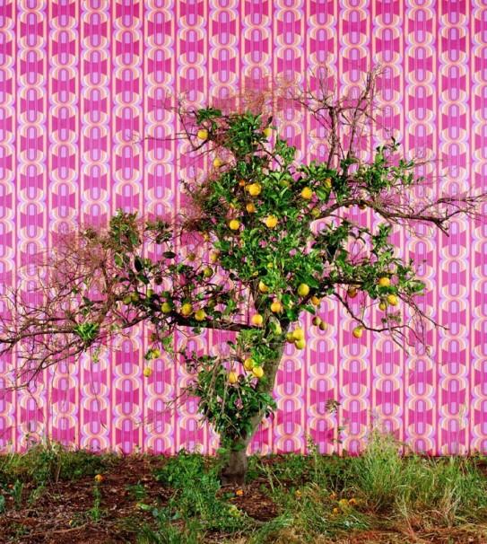 114Untitled_2005_color print_123x111 cm