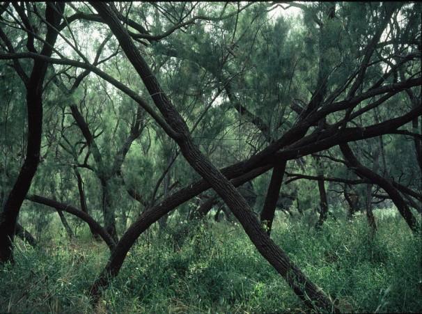 50x70 cm. 2006