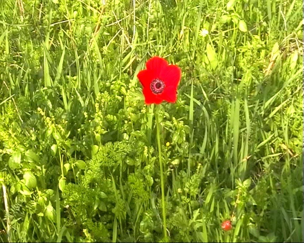 311Untitled_2007_Video still