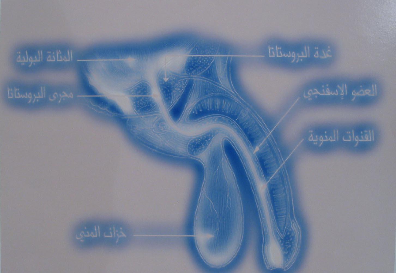 308Untitled_2008_digital print_23x40 cm