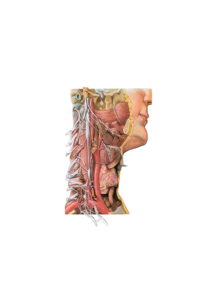 311Pornotomia no. 7_2002 - 2004_digital collage on paper_ 42x30 cm